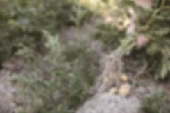 Anonby -Smakfulle omveier - Web-04.jpg