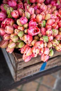 tulips-P7UH6F7_Low.jpg