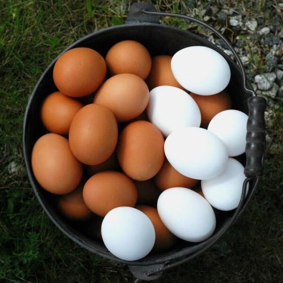 Krog Søndre egg