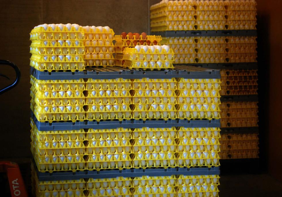 Krog Søndre kjølelager egg