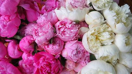 flower-3214042_lo.jpg