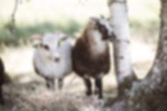 Kinn -Smakfulle omveier - Web-09.jpg