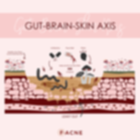 Gut Microbiome Diagram_Insta-01.png