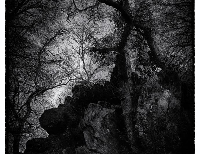 Le démon de la forêt