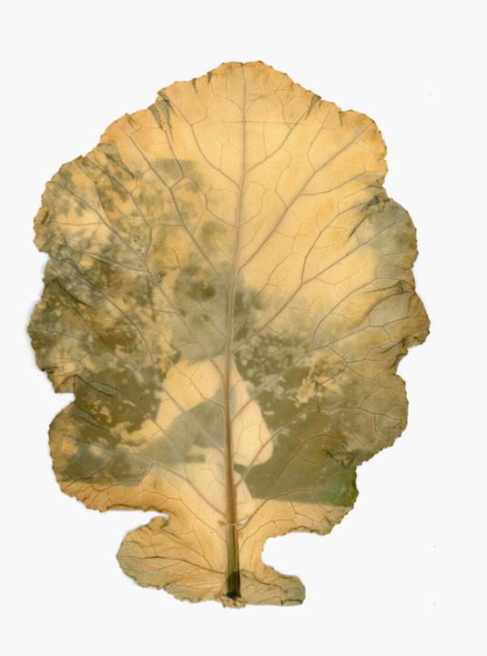 Memória ancestral, 2020, Fitotipia-fotografia, 11x16,5 cm..jpg