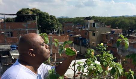 Teto Verde ou Ar Condicionado no Parque Arará? Estudos Mostram Potencial para a Favela
