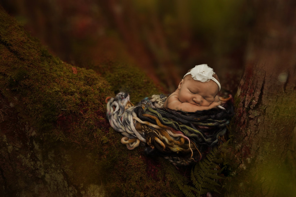 baby in tree.jpg