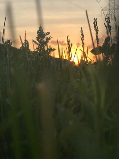 Stalks of Green