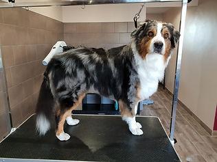 chien toiletteur bruyeres vosges