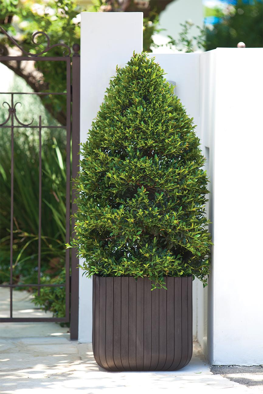KETER-Wood planter