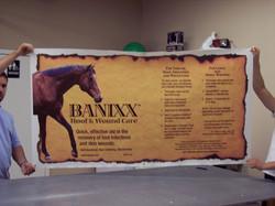 Banner Horse