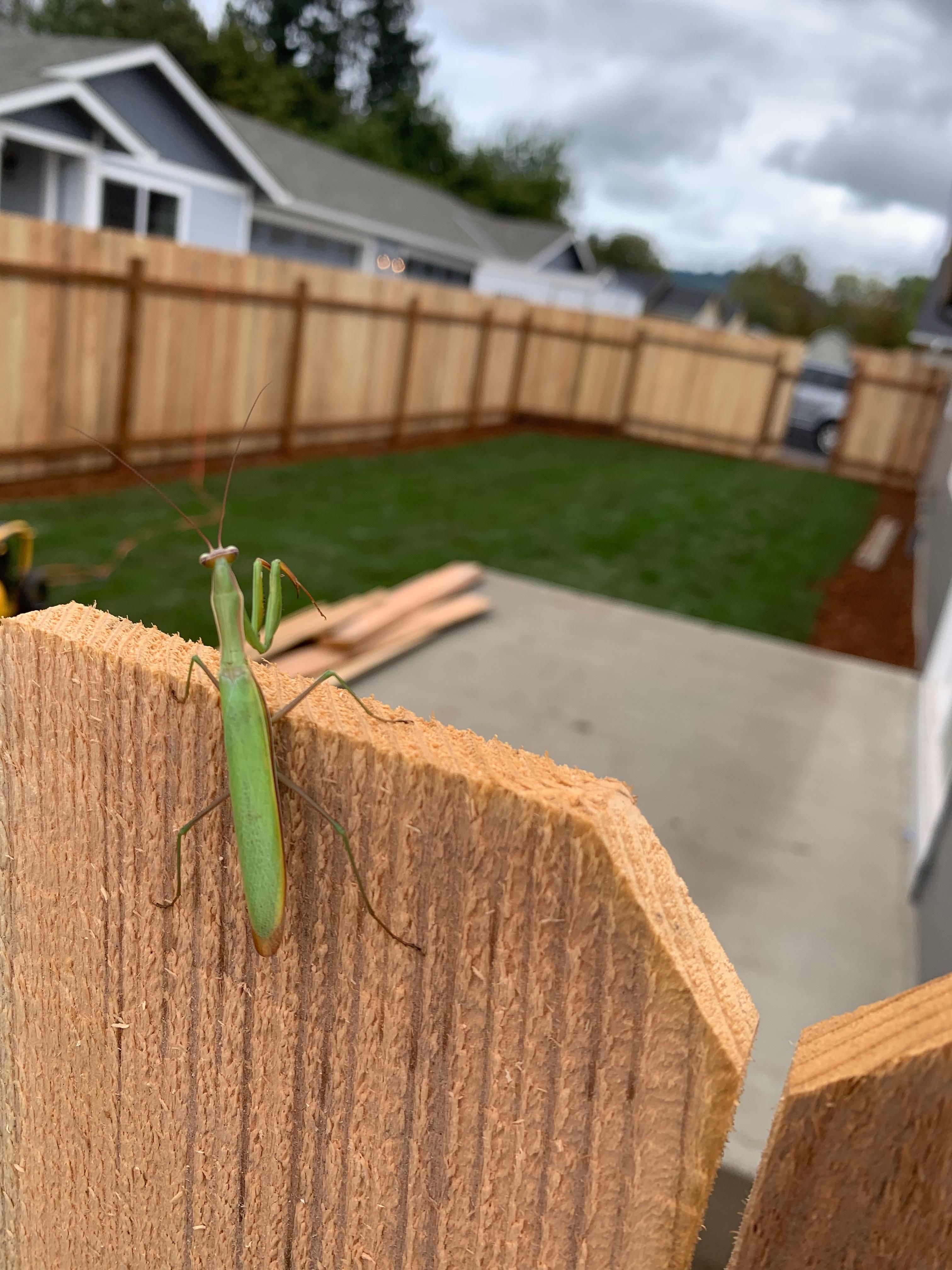 Lucky Grasshopper