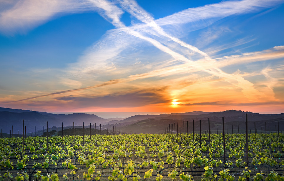 Albatross Ridge Vineyards and Sunset by