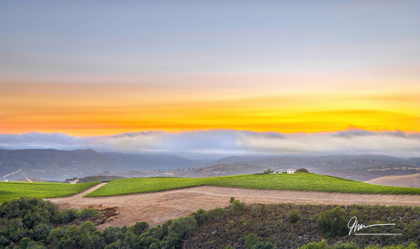 Albatross Ridge Vines and Sunset Clouds.