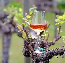 Wine glass with wine on vines.