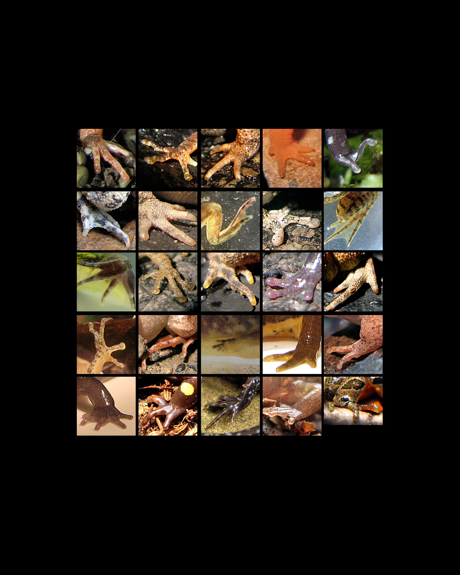 amphibian feet grid 8x10 copy 3.jpg