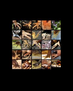 amphibian feet grid 8x10 copy 3.jpg