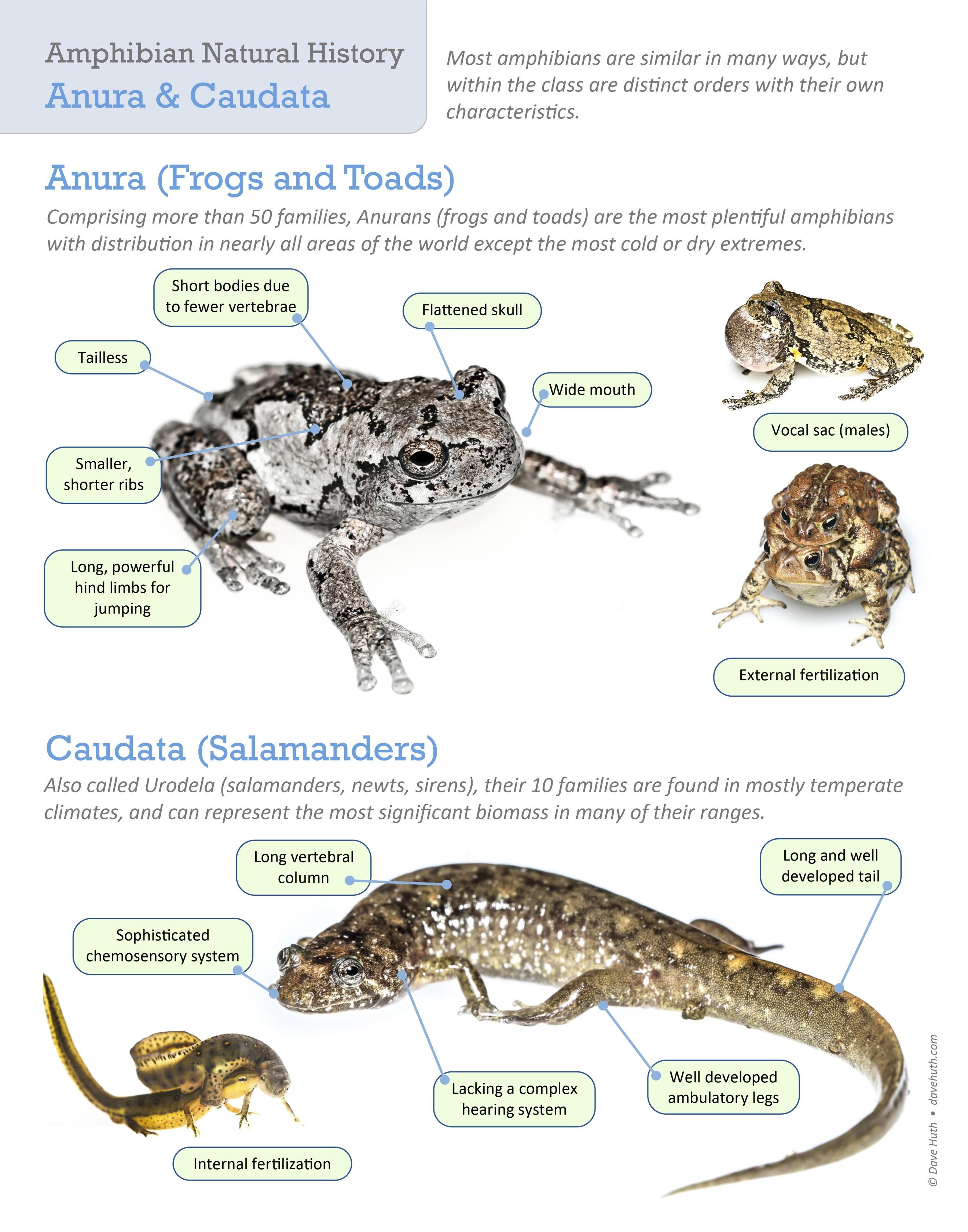RTPI frogs salamanders 11x14 copy 3.jpg