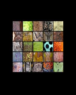 amphibian anatomy grid 8x10 copy 3.jpg