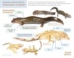 RTPI salamanders lizards 11x14 copy 3.jpg