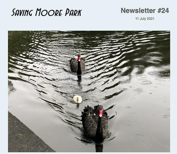 Moore Park Swans