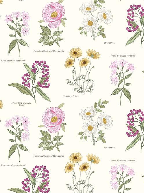 Lewis & Irene  - Botanic Garden - Flowers on Cream