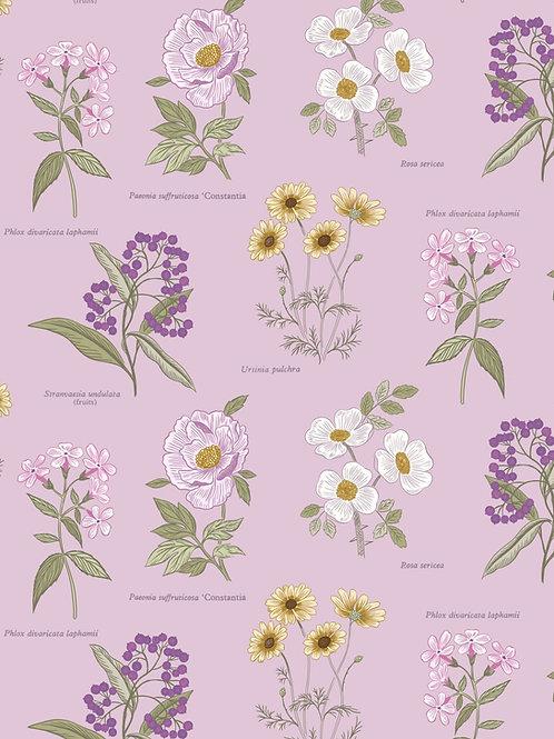 Lewis & Irene  - Botanic Garden - Flowers on Lilac