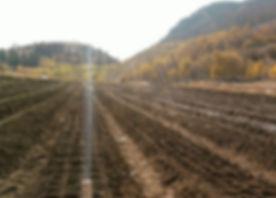 organic seed garlic