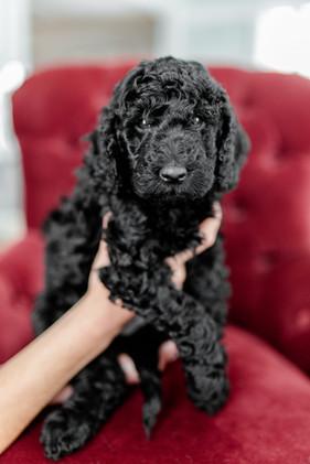 Senn Puppies-Edited-0007.jpg