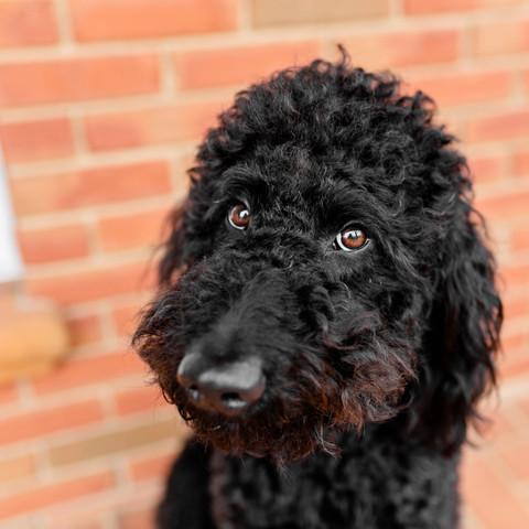 Senn Puppies-Edited-0006.jpg