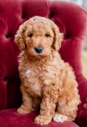 Senn Puppies-Edited-0003.jpg
