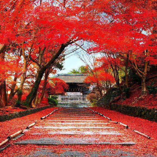 Japan Yoga Meditation Retreat from 12 to 17 November 2019