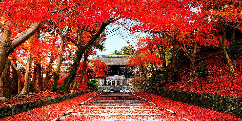 Japan Yoga Meditation Retreat from 12 to 17 November 2019