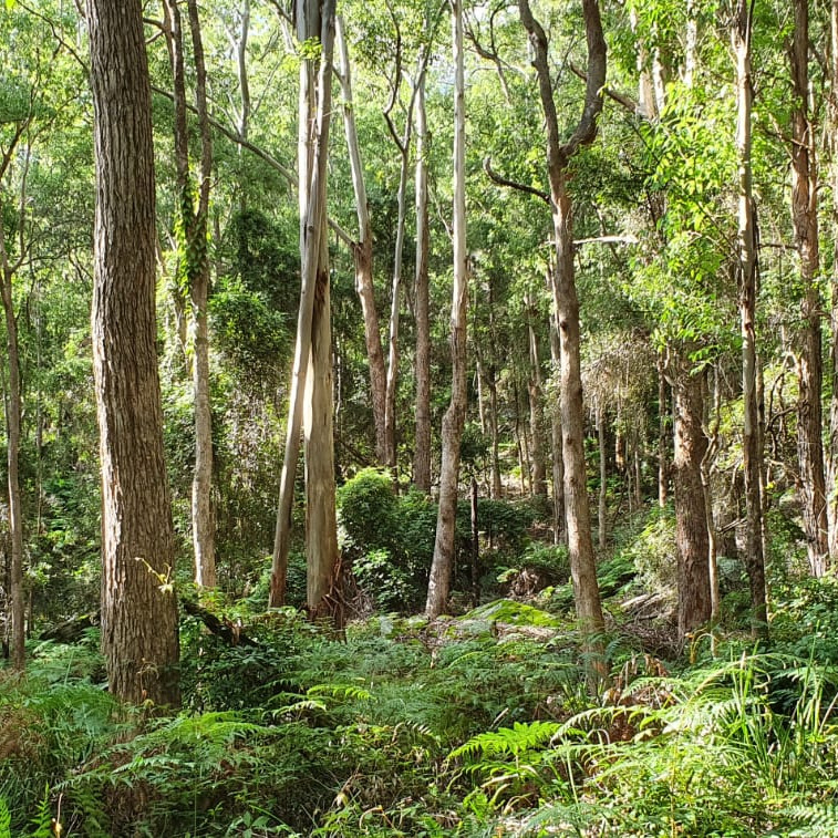YOGA RETREAT IN KANGAROO VALLEY (27-29 NOV 2020) One with Nature