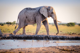 Zimbabwe and Botswana Safari Nov. 2017