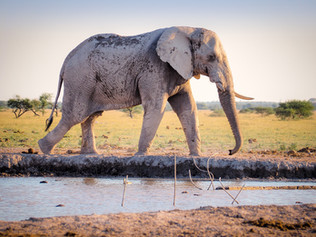 Monday Musings…How to Eat an Elephant