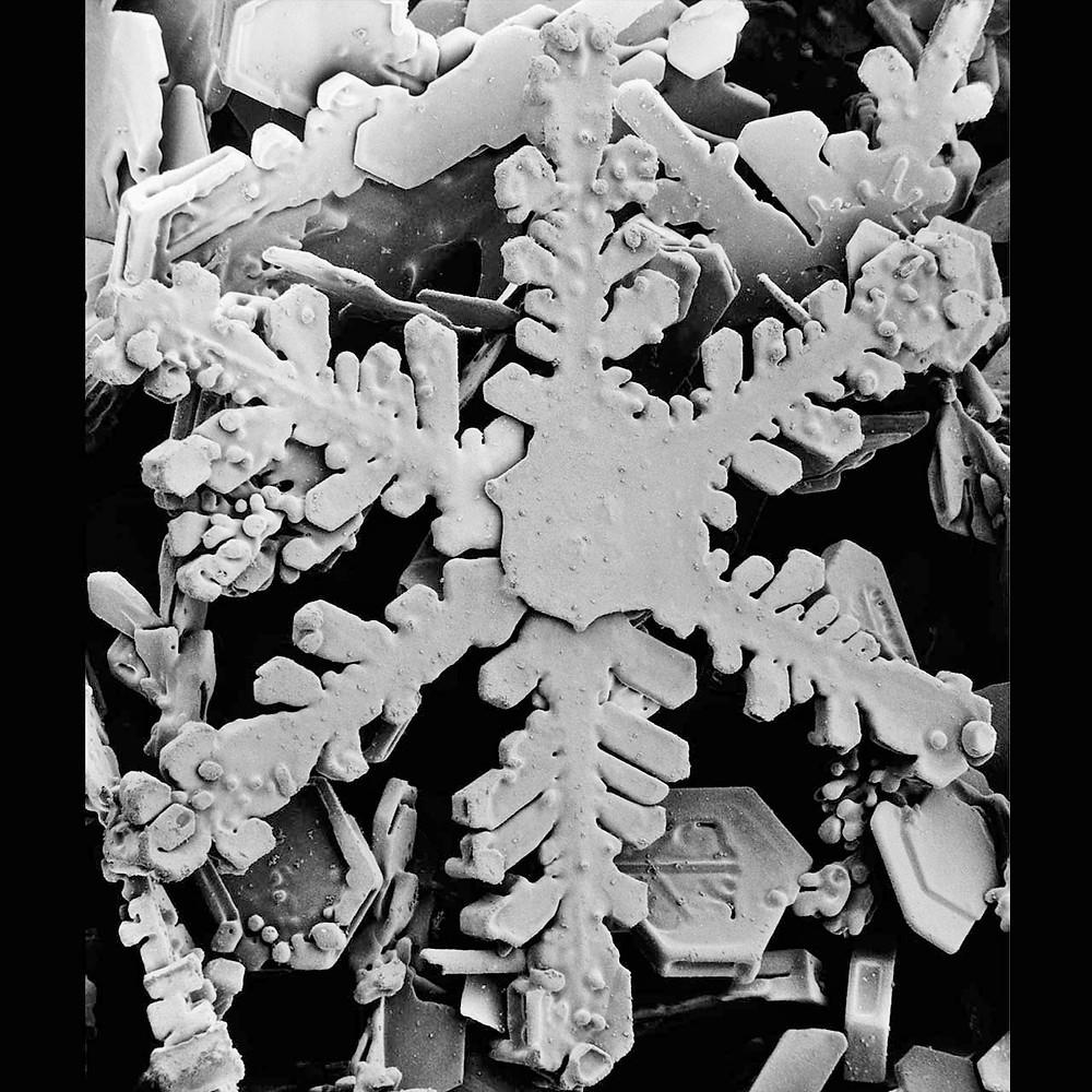 from Robert Hooke's 16th study, Micrographia