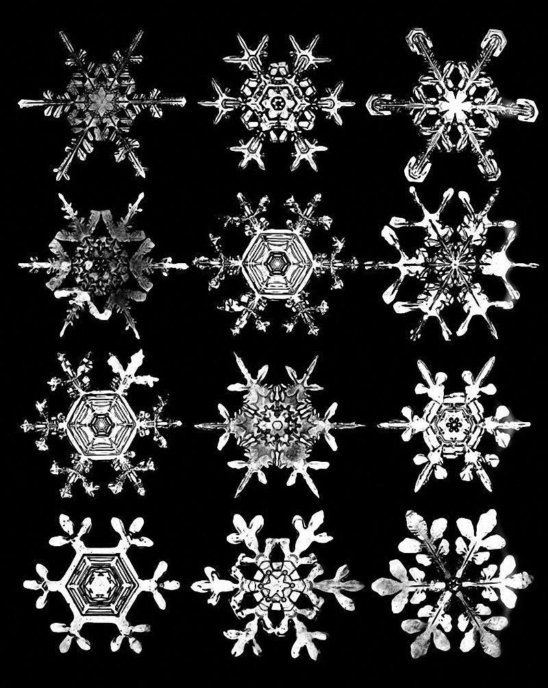 Bentley's 1903 photo montage of snowflakes