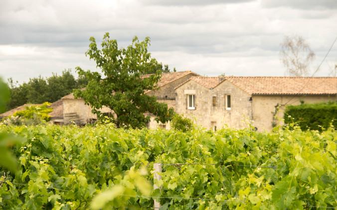 Au coeur de notre propriété viticole