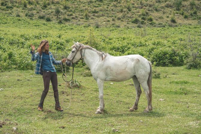 horse-trading-albania