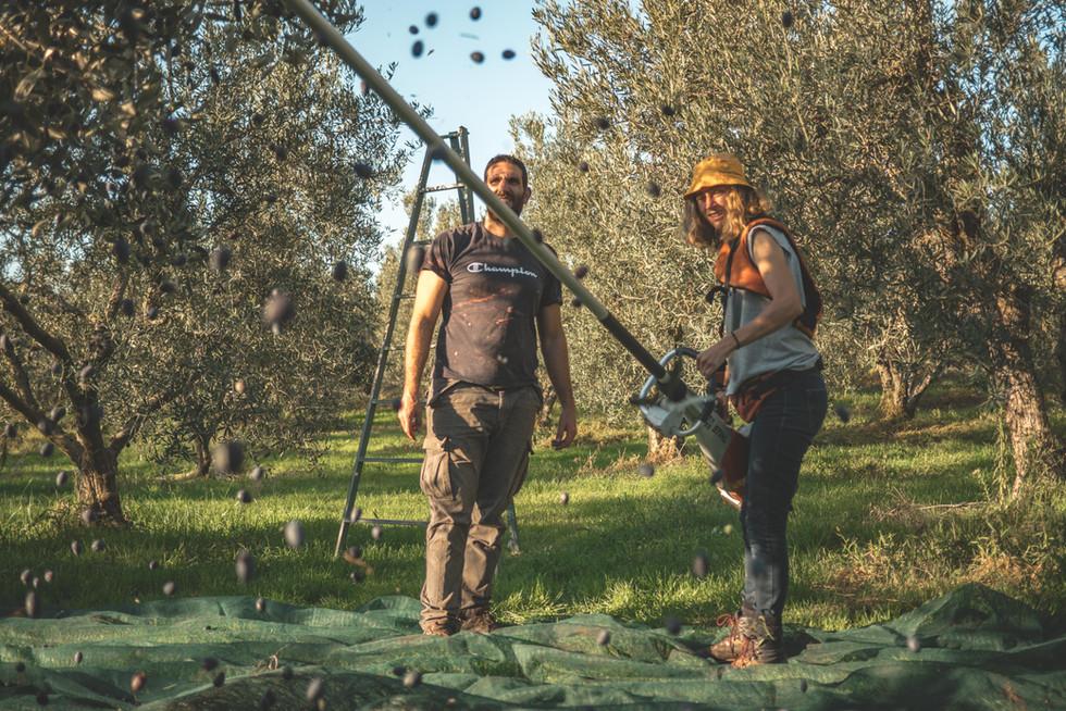 olive-oil-greece