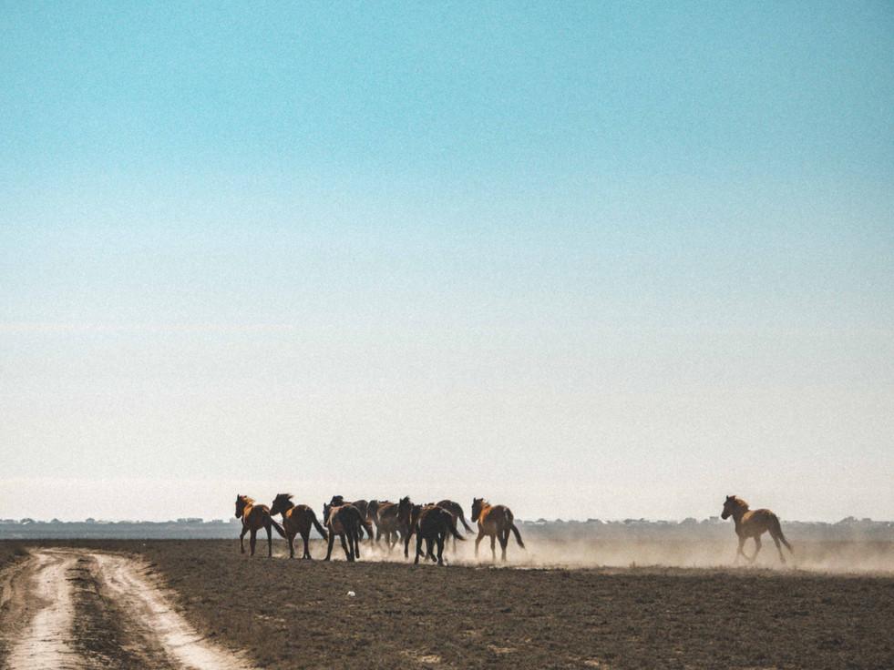 cycling-desert-kazakhstan