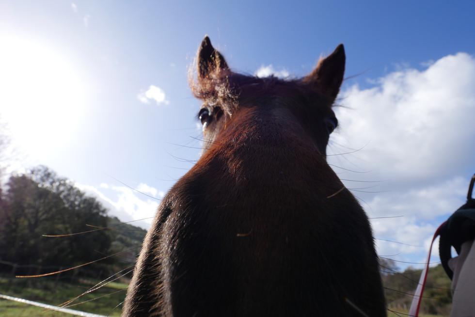cheval-race-corse