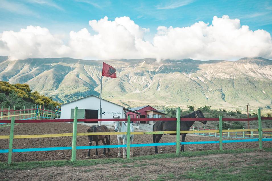 asim-zeneli-albania