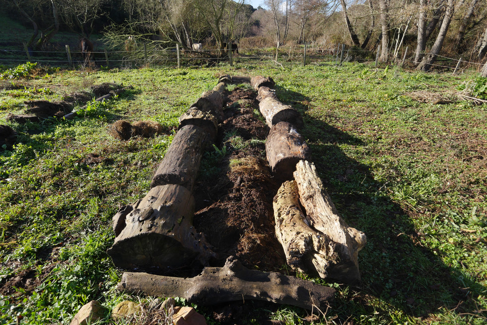 planche-permaculture