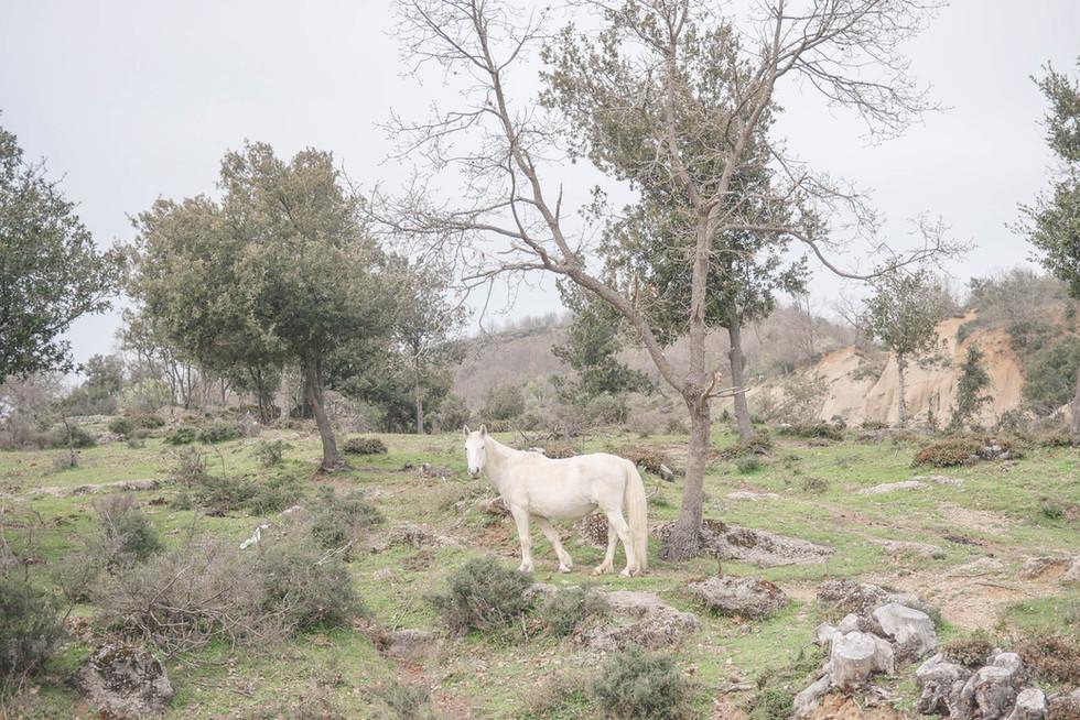 horse-calabria-italia.jpg