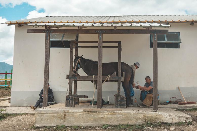 horse-riding-albania