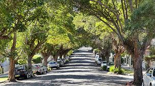 Tree lined Carrington Street.jpg