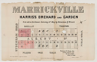 1883 Marrickville, Harris's orchard and