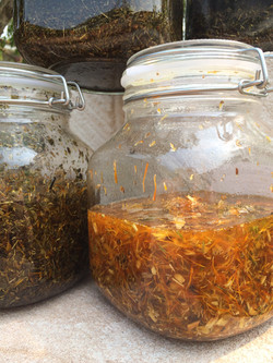 Infusing herbs.